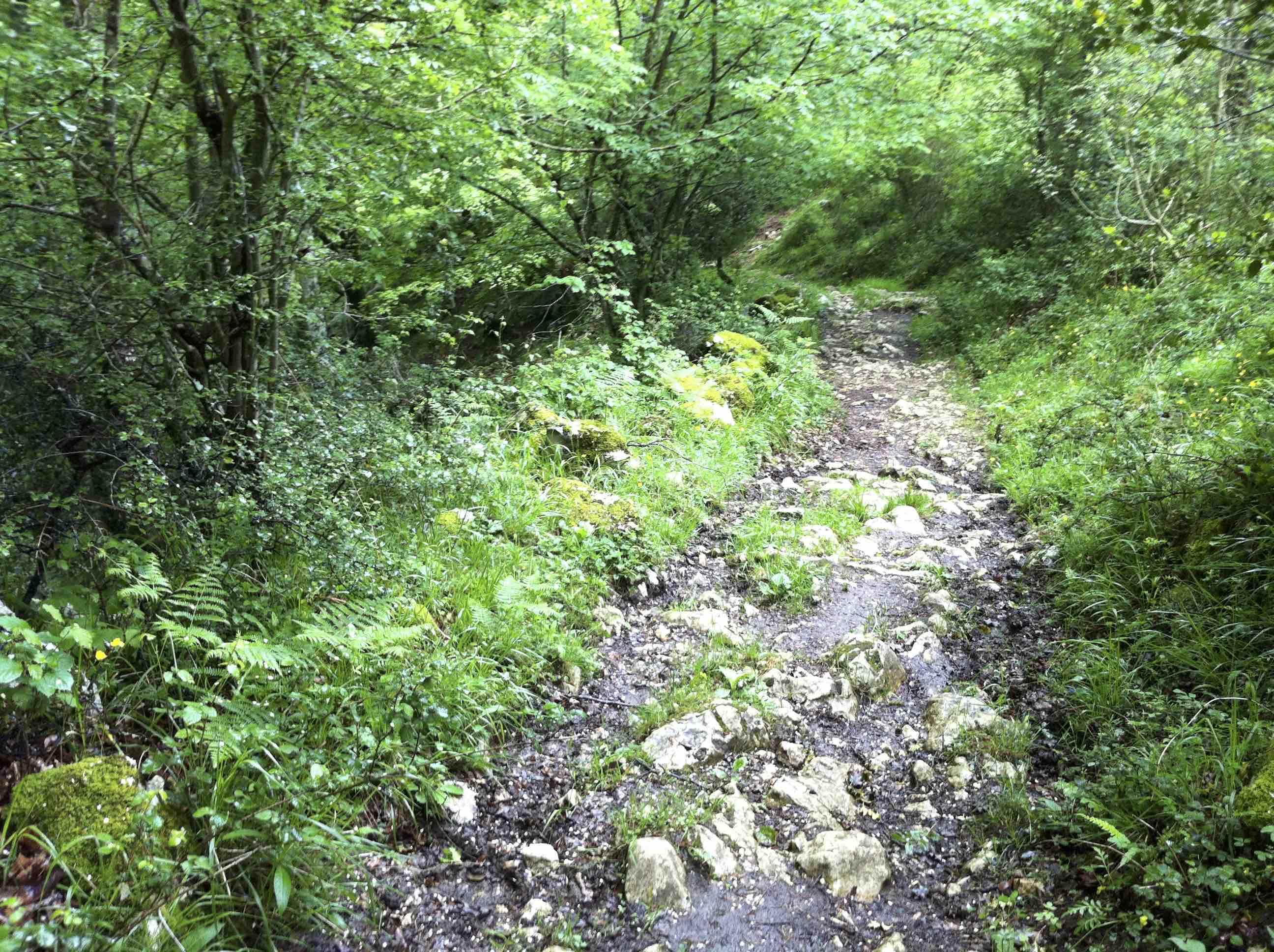 El camino de entrada a Orandi