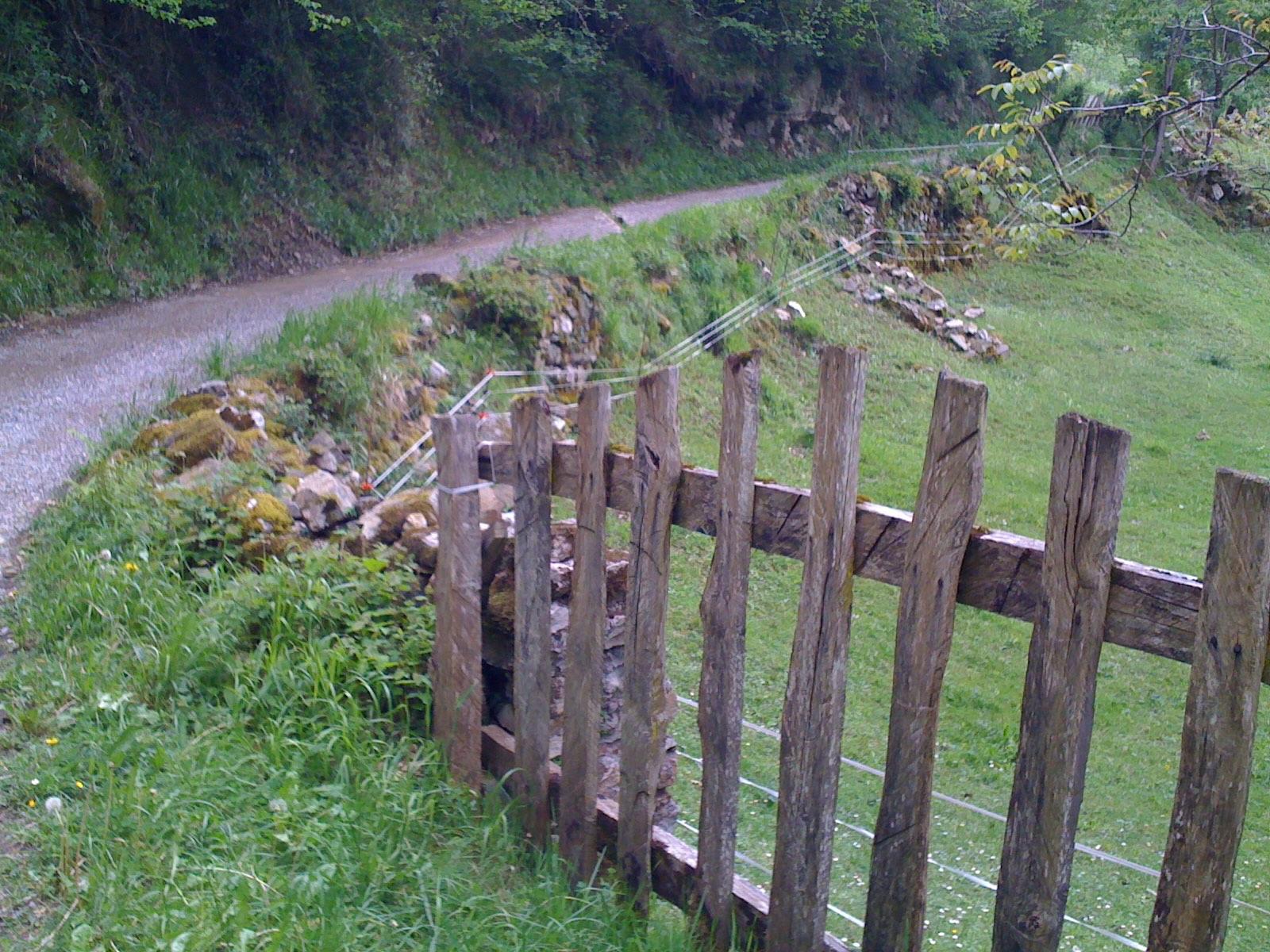 Camino, ovejas