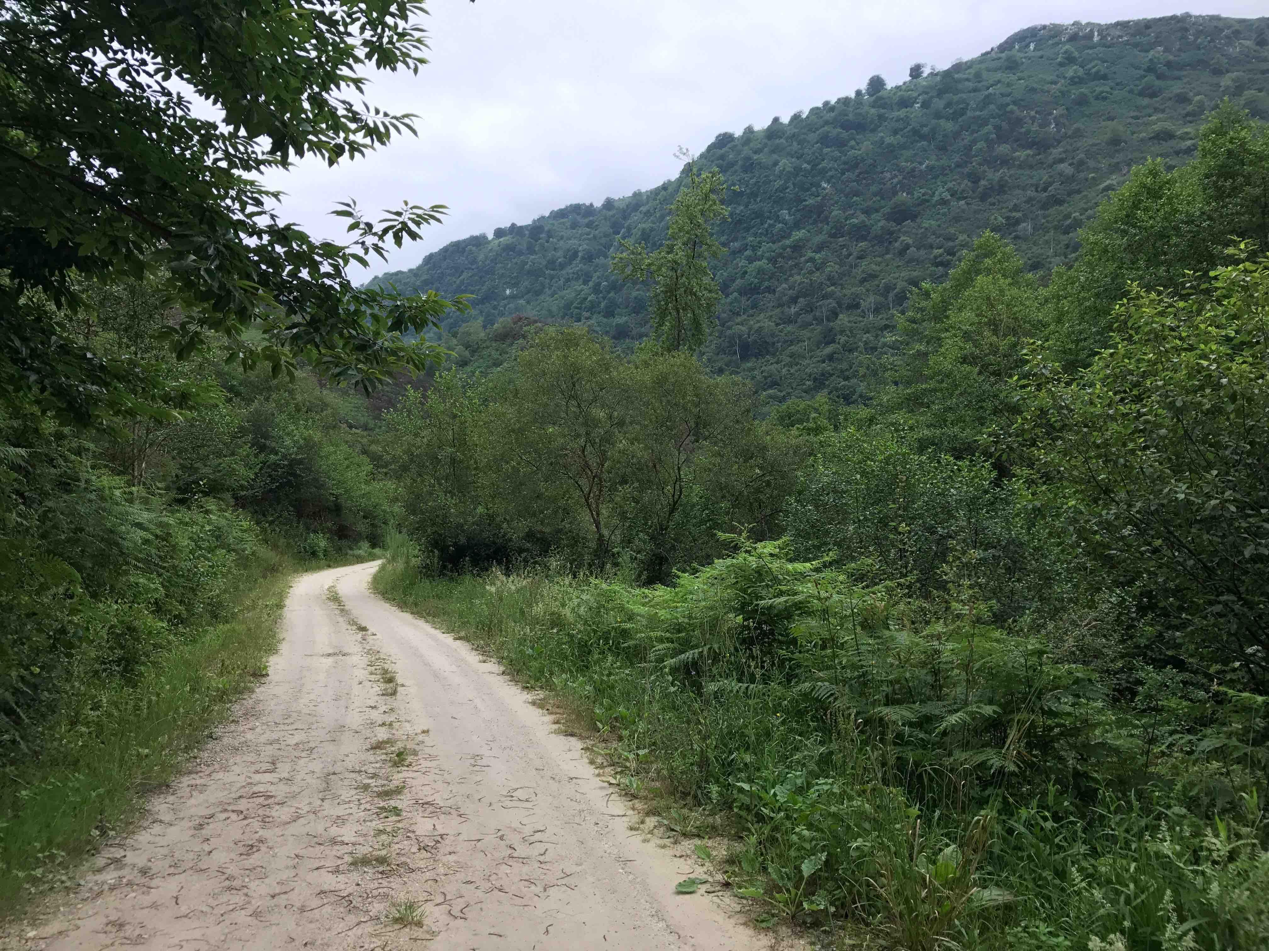 3 Camino